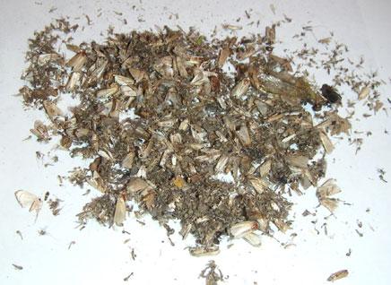 piege moustique tigre pro uv co2 mosquito trap unique efficace photocatalyse ebay. Black Bedroom Furniture Sets. Home Design Ideas